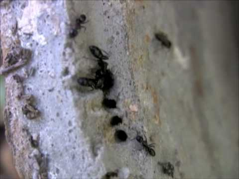 Carpenter Ant Nest closeup in deer feeder