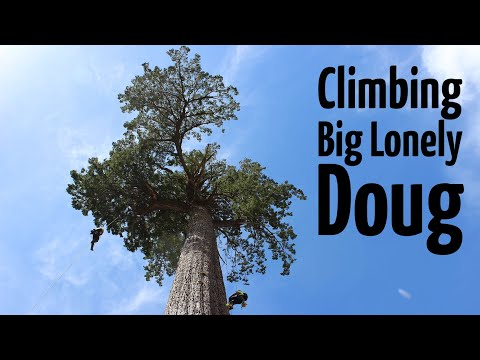 Climbing 'Big Lonely Doug' | Canada's 2nd largest Douglas Fir