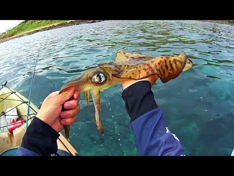 Huge Squid And Unbelievable Snook Kayak Fishing Adelaide Metro!