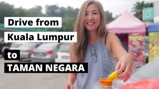 TAMAN NEGARA - drive from Kuala Lumpur - Roti Jala and Jungle Night Walk