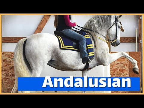 About The Andalusian: The Horse Of Royalty