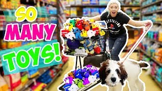 BUYING MY DOG ANYTHING HE TOUCHES! NEW PUPPYS FIRST TIME!