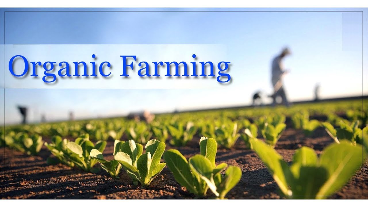 what is organic farming yahoo