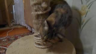 """Кошка Ромашка и канатный """"змей"""")))"""
