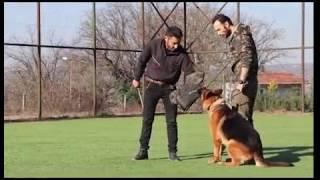 Tobi von Petworld Alan Koruma ve Bodyguard Eğitimi