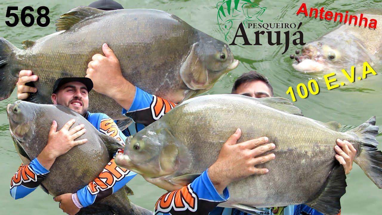 Arujá - Pescaria difícil com os gigantes na superfície - Fishingtur na TV 568