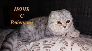 КОТЫ И ДЕТИ 😻КОШКА ОХРАНЯЕТ НОЧЬЮ РЕБЕНКА 🐱 Добрая Милая Кошка Скоттиш Фолд 🐱