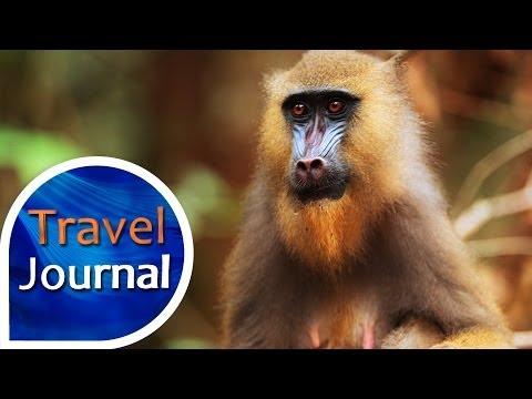 Travel Journal (159) - Focení mandrilů v Gabonu s Michalem Jiroušem