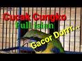 Cucak Cungko Masteran Burung Terbaik Suara Nglengking Pedes Cocok Buat Semua Jenis Burung Ocehan  Mp3 - Mp4 Download