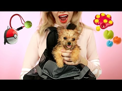 Thumbnail: Testing Out WEIRD Dog Products with NEW TEACUP PUPPY! *So Cute*