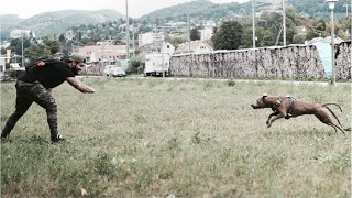 Kommando FASS   Wir Richten die Hunde ab! Hundeerziehung by Viomalia