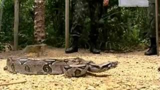 Atores da Globo no Curso de Guerra na Selva