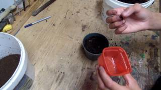 Planting White Rose of Sharon Seeds
