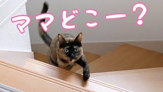 ママを探すサビ猫を黙って待機したら…?