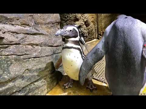Home Safari - Penguin - Cincinnati Zoo
