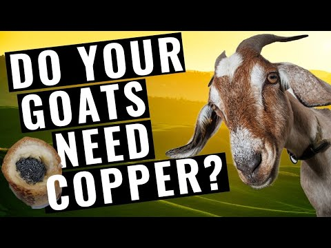 Goats and Copper Boluses--What YOU need to know!