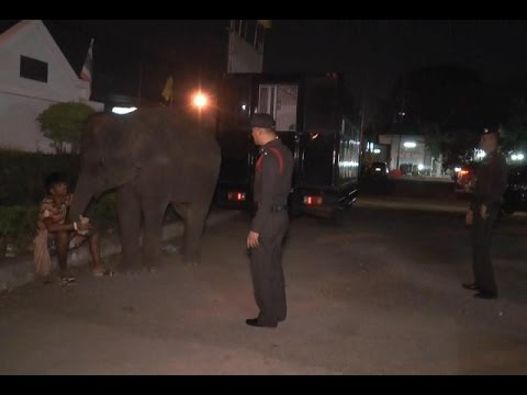 ช้างเร่ร่อนทำร้ายคนบาดเจ็บหลังซื้ออาหารให้