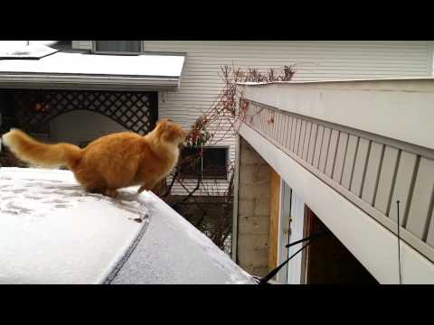 Waffles the Terrible – Funny Cat Fails Jump – Slow Motion
