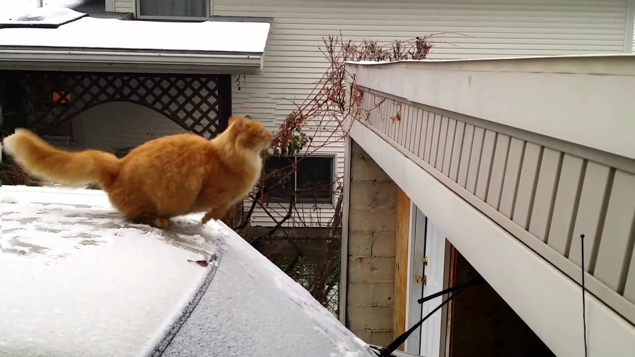 Waffles the Terrible - Funny Cat Fails Jump - Slow Motion