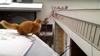 Waffles the Terrible  Funny Cat Fails Jump  Slow Motion