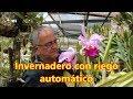 Visita a un invernadero de orquídeas con riego automático