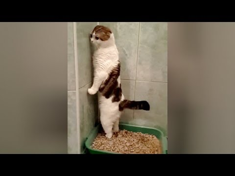 SUPER WEIRD CATS that will totally CONFUSE YOU! - Extremely FUNNY CAT VIDEOS compilation