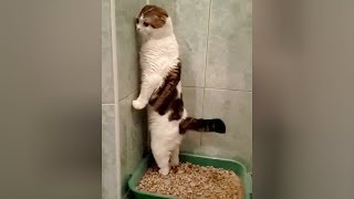 Best Funny Cat Videos Ever