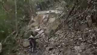 Italian Greyhound Trekking 愛犬のイタグレ(ゾロ)と足立山(北九州)...