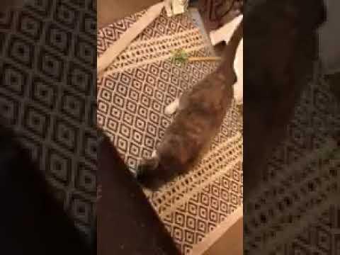 Brooklyn Animal Action - Julie