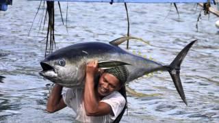 Тунец. Виды тунца. Фото и видео