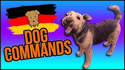 German Dog Commands 🐶🇩🇪 A Get Germanized Guide