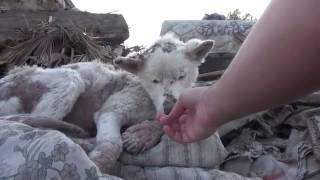 Добрый поступок. Спасение бедной собаки