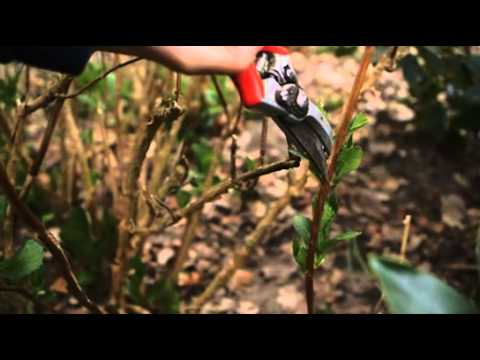 A gardeners' how to guide: Pruning