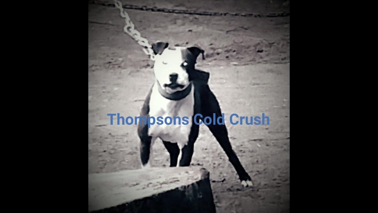 THOMPSON KENNELS CRUSH (BOYLES BOLIO ELI )