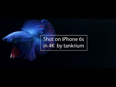 IPhone 6s - Video Test Of Betta Fish In 4K