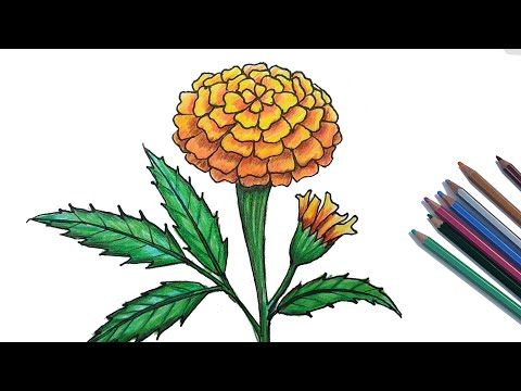 Images of types of marigold flowers