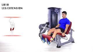 Leg extension BH