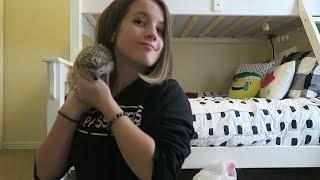 Hedgehog Care 101