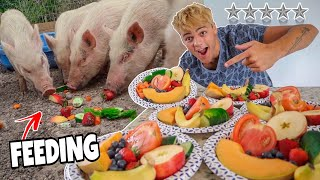 ULTIMATE 5 STAR MEAL for My PET PIGS!!
