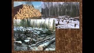 Презентация Экологические проблемы современной России и пути их решения