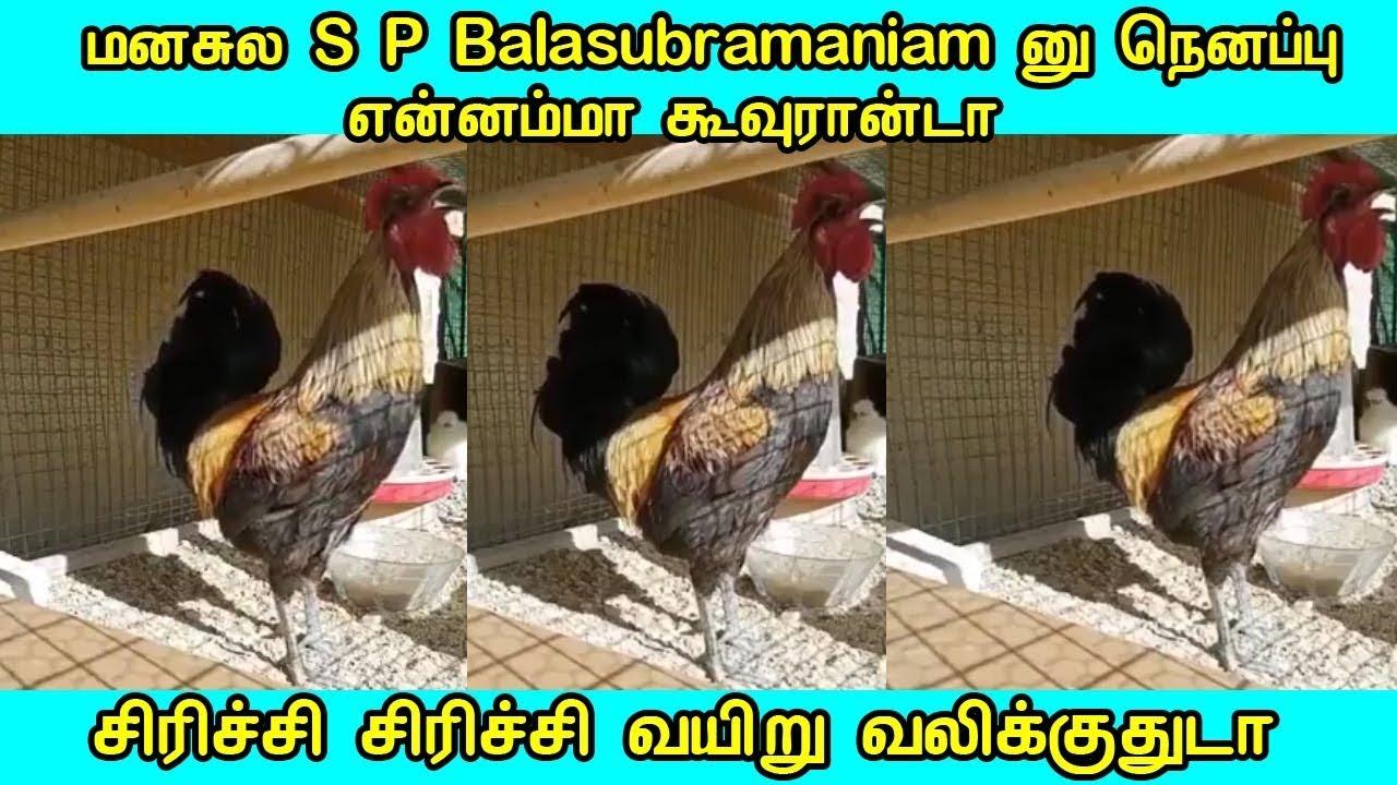 மனசுல S P Balasubramaniam னு நெனப்பு என்னம்மா கூவுரான்டா @Tamil News