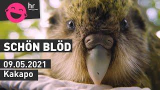 schönblöd – Kakapo