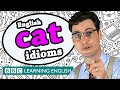 Cati Idioms - The Teacher