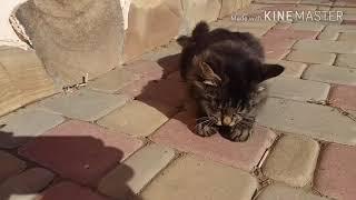 Кот КУКИ и Кошка ВАСИЛИСА