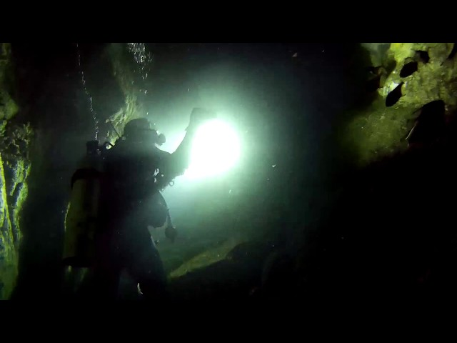 OzDive in Australia - Diving with Grey Nurse Sharks at Fish Rock (2015)