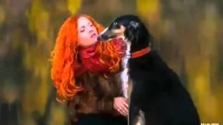 Сколько стоит аренда собаки для фотосессии в Москве, 8(916)702-11-08