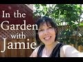 Garden Tour with Jamie - The Delphiniums are Here!