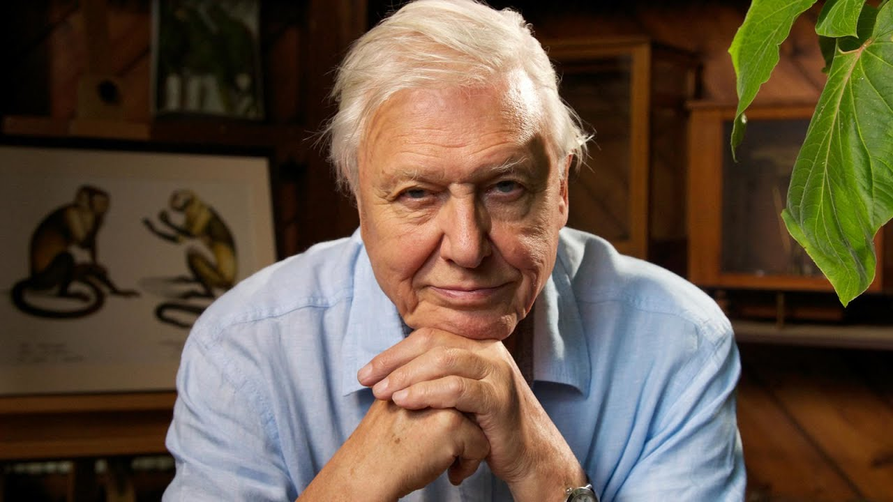 The Amazing Life of Sir David Attenborough (Attenborough ...