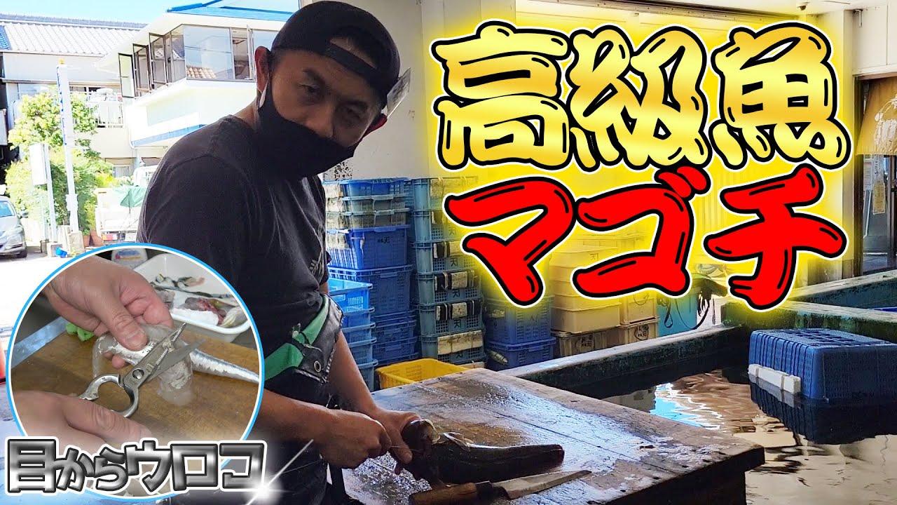 【夏のフグ】骨抜きが難しい高級魚に再挑戦して捌きます!!