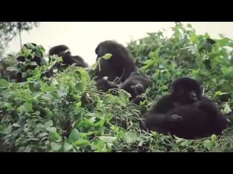Discover Remarkable Rwanda